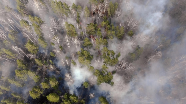 Aerial, tilt down, drone shot, overlooking trees in flames, forest fires destroying and causing air pollution