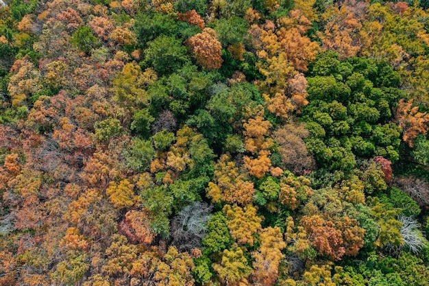 Aerial top down view of many trees in autumn season forest.