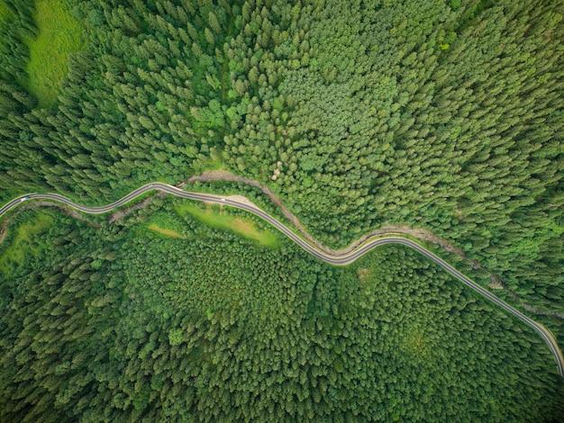 山の中を曲がりくねった道が通る針葉樹林の空中トップダウンビュー