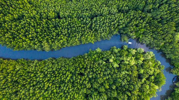 Aerial top view of boat on the river in mangrove forest conservation in thailand