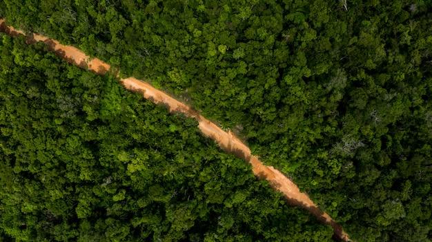 上からの眺めの生態系と健康的な環境の概念と背景、上からの眺め熱帯気候のジャングルの森の木。