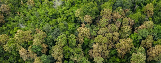 Aerial top view of forest texture background view from above