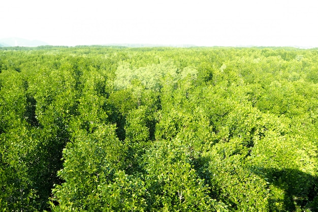 Aerial top view forest, texture of forest view from above nature mountain background