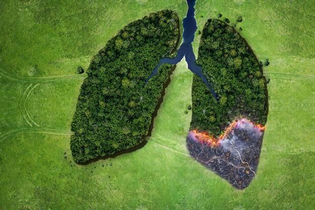 火災の生態学的災害の空中上面図の森の木。森の木々からの肺と火の概念。エコロジーと環境の創造的なアイデア。惑星地球の息吹