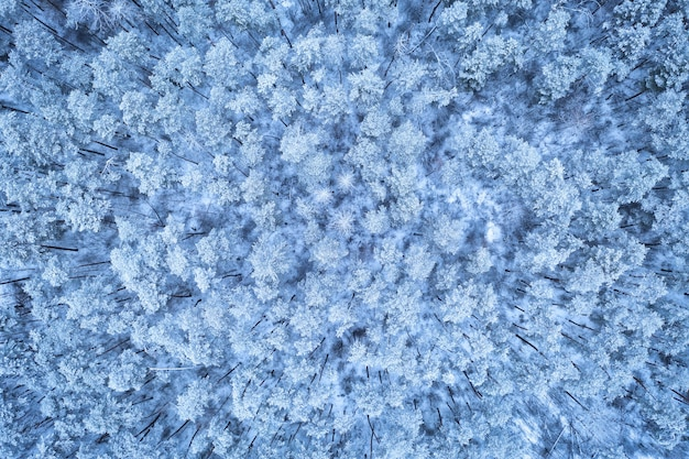 Aerial top view on the forest at the winter day. cold winter landscape from drone. pine forest under