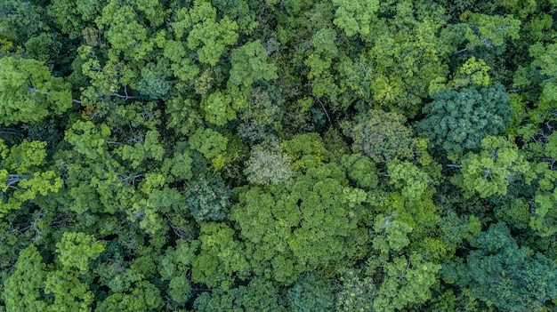 Aerial top view forest,