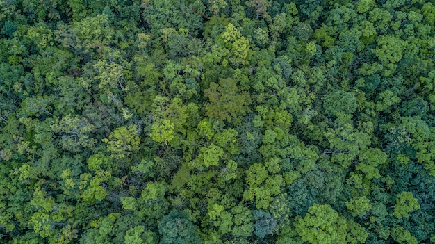 Aerial top view forest