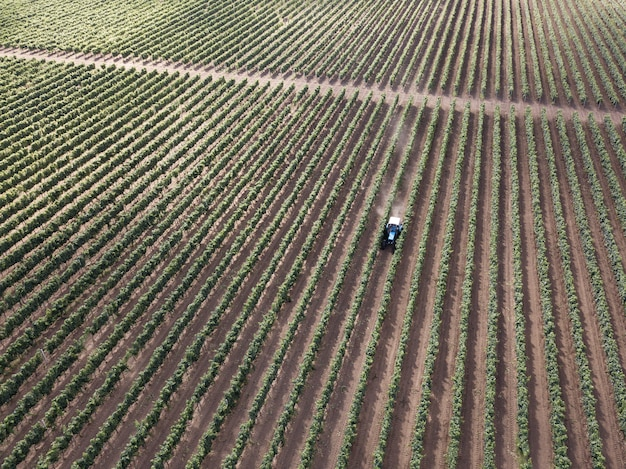 Aerial top view from drone to vineyard with tractor
