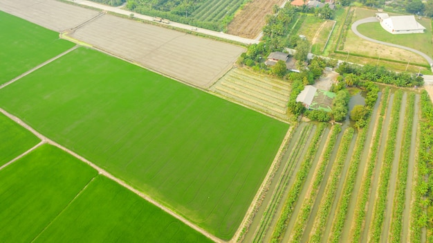 Aerial top view of green agricultural areas
