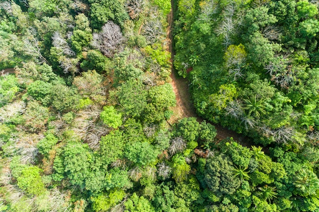 Aerial top view green forest for nature background