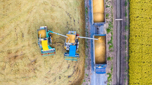 Aerial top view of harvester machine and truck working in rice field, view from above