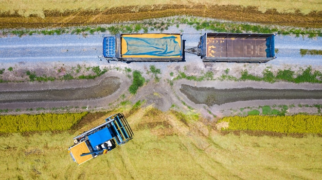 Aerial top view of harvester machine and truck working in rice field
