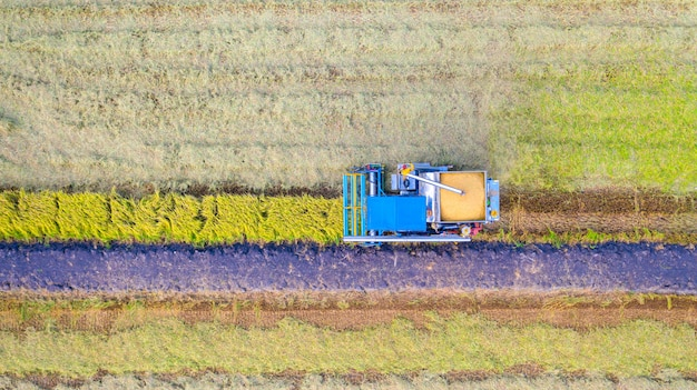 Aerial top view of harvester machine working in rice field from above