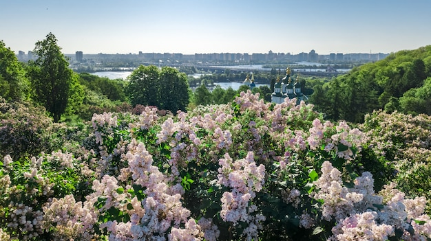 Aerial top view of kiev city and botanical garden park from above, blossoming lilac and kyiv cityscape, ukraine