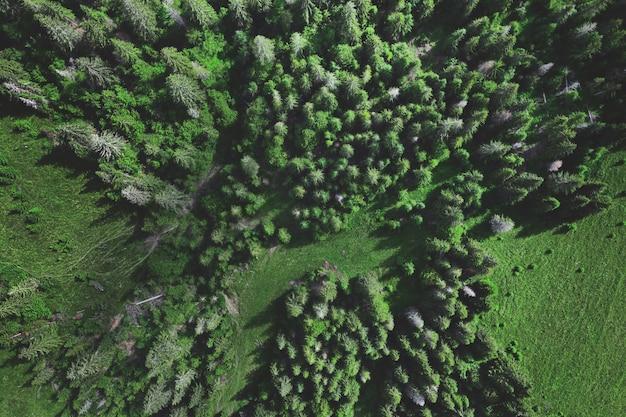 夏の緑の森の空中上面図。ドローンショット