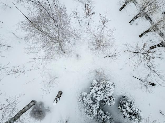 겨울 눈 덮인 숲의 공중 평면도