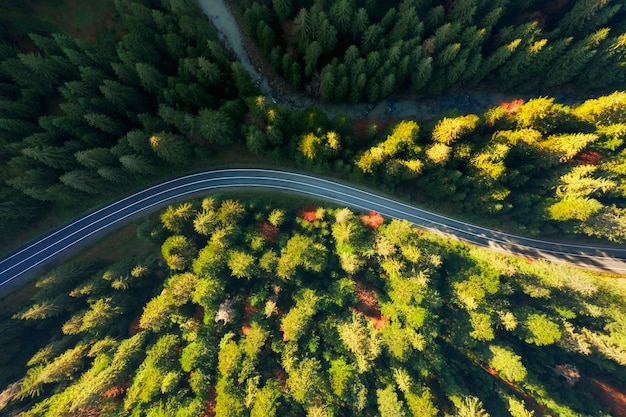 Aerial top view of winding road through a dense pine forest in the mountains.