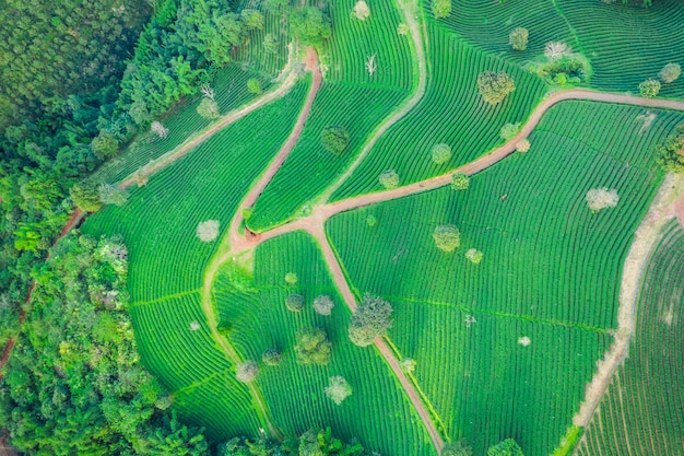Aerial view agricultural area