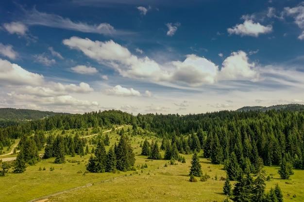 夏の日の山の森の空撮