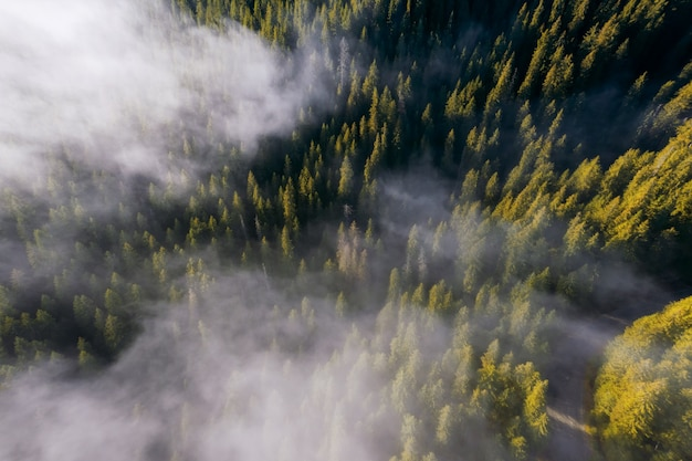 Aerial view of autumn forest in low clouds at sunrise.
