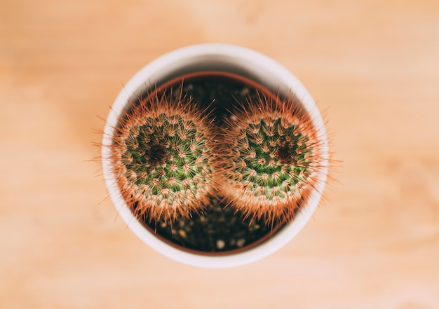 Aerial view of cactus flower pot in a wood table.