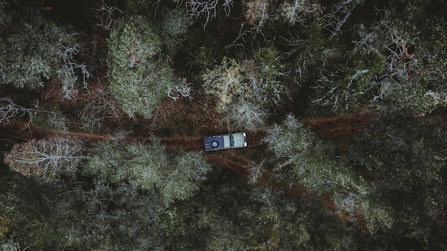 Aerial view of a car driving in a forest surrounded by tall trees