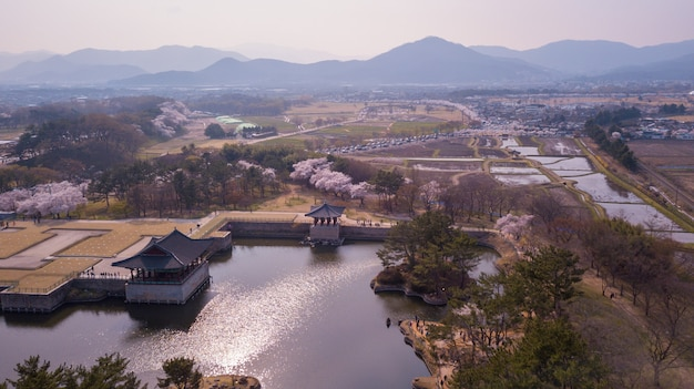 Aerial view of cherry fastival in south korea