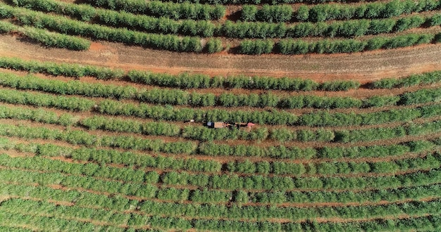 Aerial view of a coffee farm. coffee plantation viewed from above. big coffee farm. coffee plants. minas gerais, brazil.