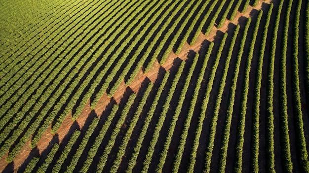 Вид с воздуха на кофейную плантацию в штате минас-жерайс, бразилия