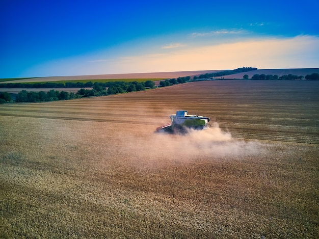 Aerial view on combine harvester gathers the wheat at sunset. harvesting grain field, crop season.