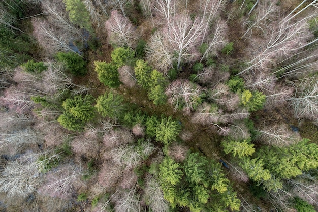 Aerial view  of a dense forest with bare deep autumn trees with a dried foliage