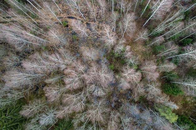 Vista aerea di una fitta foresta con alberi nudi d'inverno e foglie cadute su un terreno