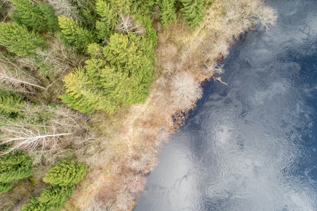Aerial view of a dense forest with evergreen autumn trees grown by a reflective water surface