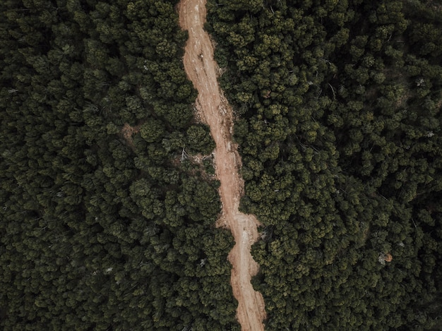 Aerial view of dirt road surrounded by trees