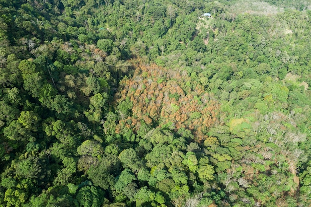 공중 보기 드론 카메라 상단은 건강한 환경 개념과 여름 배경을 갖춘 열대 우림 나무 생태를 볼 수 있습니다.