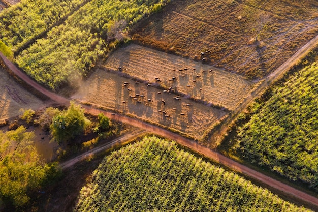 Aerial view drone farm and landscape in sunlight