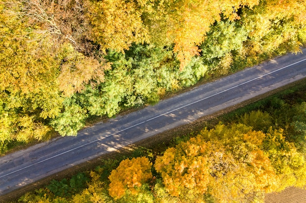 Aerial view of empty road between yellow fall trees.