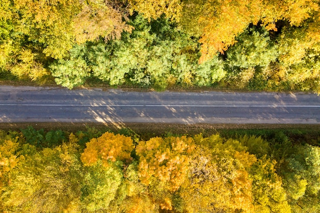 Aerial view of empty road between yellow fall trees