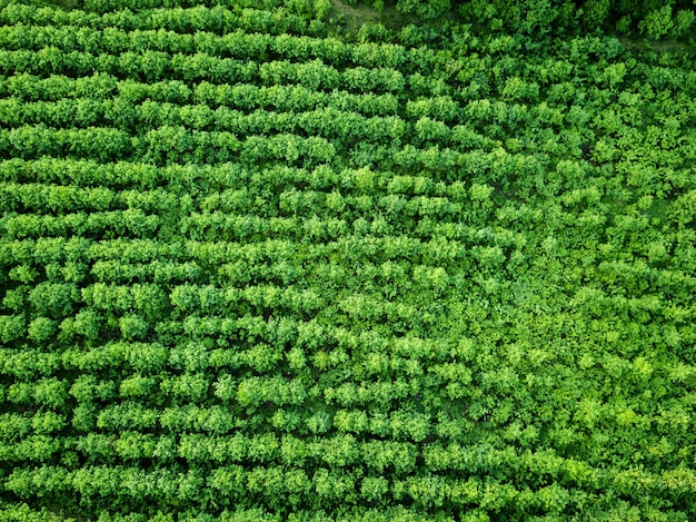 空撮ファーム緑の植栽フィールド、農業。自然な背景。ドローンからの写真
