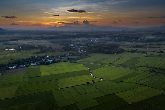Aerial view of farmland / rice field in thailand