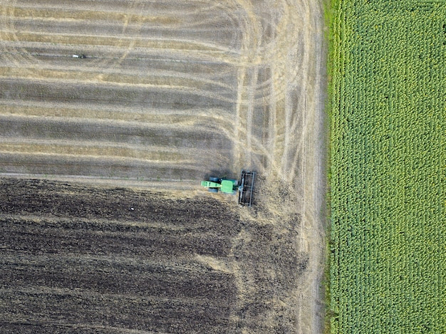 Aerial view on a field with ripened and unripened sunflowers. harvesting a tractor on an agricultural field
