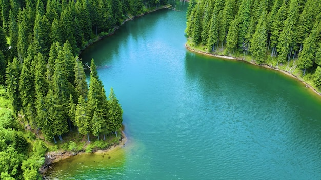 Aerial view of the flowing river surrounded by the pine trees in the park