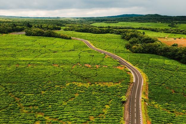 Вид сверху на дорогу, проходящую через чайные плантации на острове маврикий, маврикий.