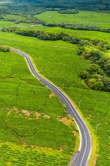 モーリシャス、モーリシャス島の茶畑を通る道路の上からの空撮。
