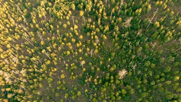 Вид с воздуха с дрона на последствия лесного пожара. природный пейзаж.