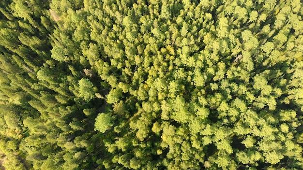 針葉樹と緑の木立のドローンからの空撮