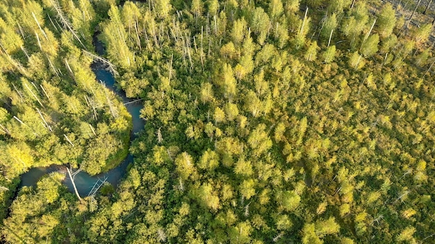 Aerial view from drone of young trees. little river. nature landscape.
