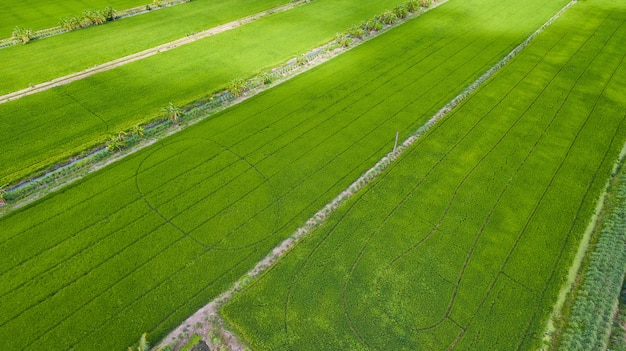 Aerial view from flying drone of field rice with landscape green pattern nature background