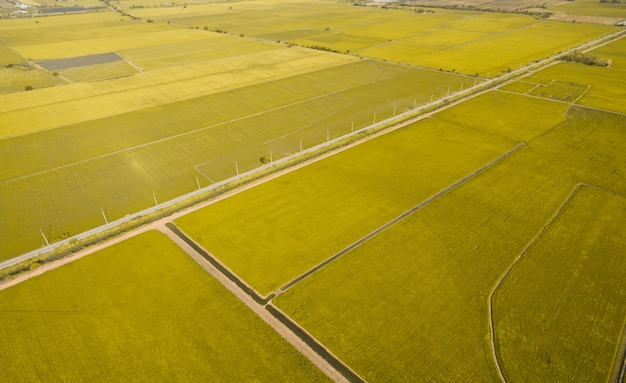 Aerial view from flying drone of field rice with landscape