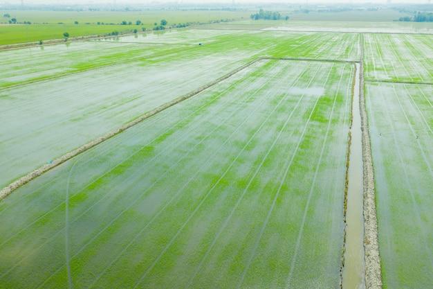 Вид с воздуха от летающего дрона полевого риса с пейзажным зеленым узором природы фона, вид сверху полевого риса